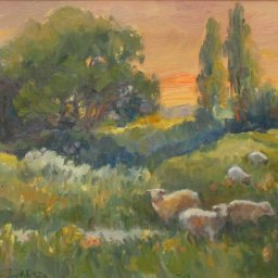 "Sunrise Sheep ● 11"" x 14"" ● Oil ● $800"