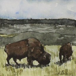 """Yellowstone Bison ● 5"""" x 5"""" ● Watercolor ● $250"""